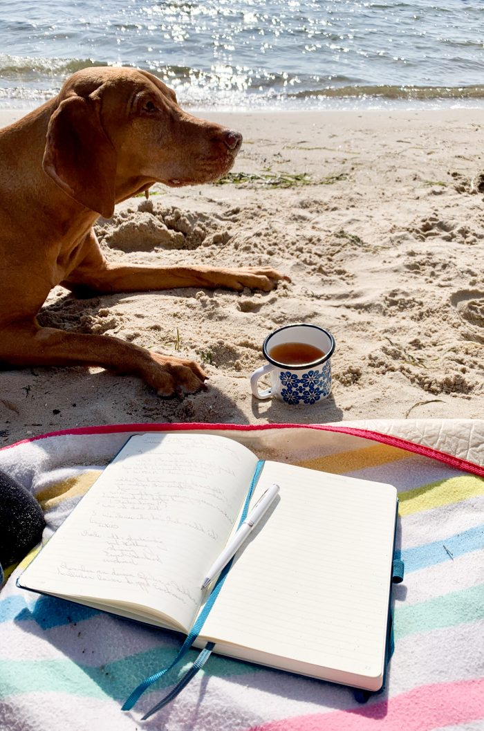 Arbeiten mit Hund am Strand