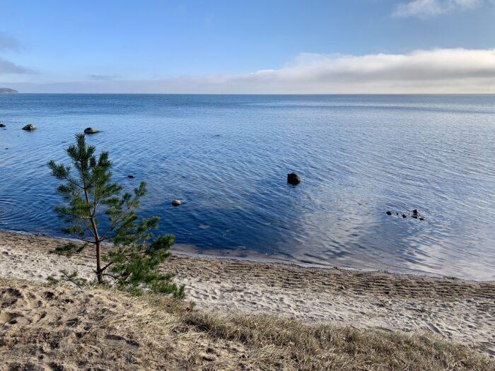 Blick auf die blaue Ostsee mit Strand und Kiefernbäumchen
